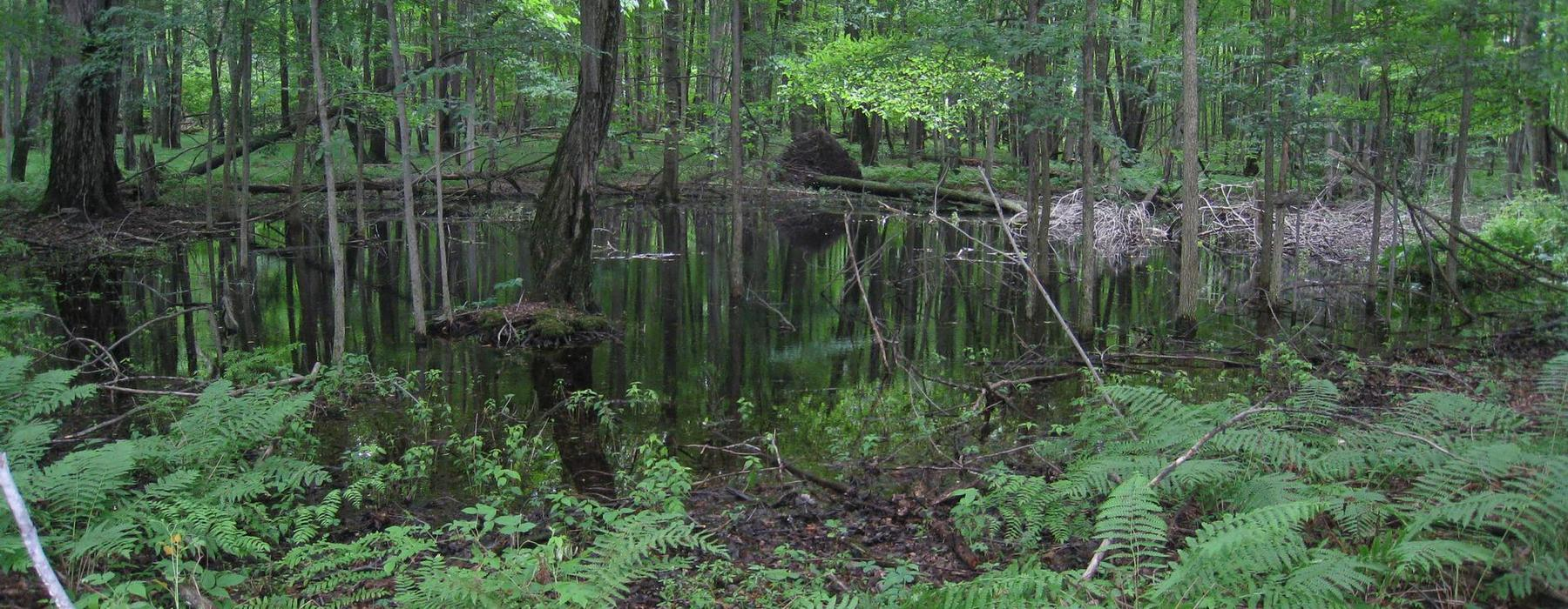 Encourage vernal pool conservation through local and state measures